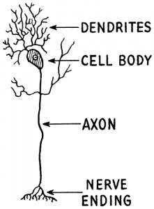 Neuron Clip Art Download.