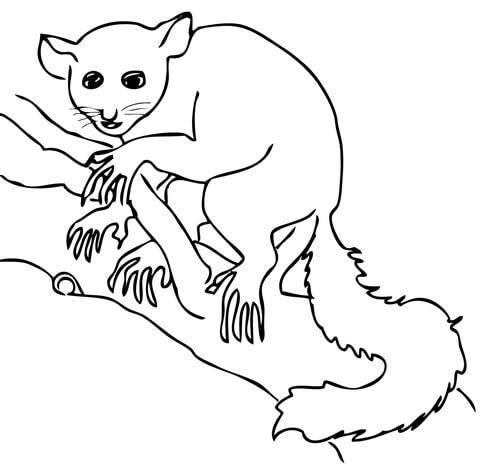 Aye Aye Lemur coloring page.
