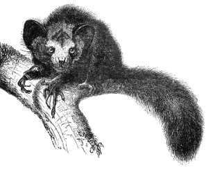 Primates Clip Art Download.