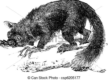 Possums Illustrations and Clipart. 63 Possums royalty free.