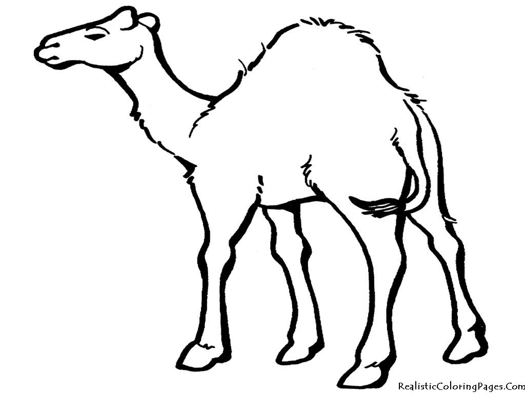 Free Cartoon Desert Animals, Download Free Clip Art, Free.