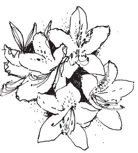 Azalea Clip Art.