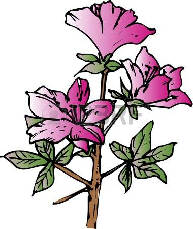 412 Azalea Cliparts, Stock Vector And Royalty Free Azalea.