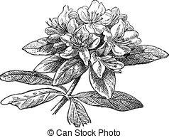 Azalea Illustrations and Clipart. 301 Azalea royalty free.