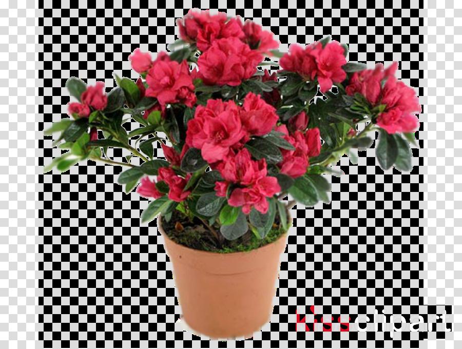 flower plant azalea pink shrub clipart.