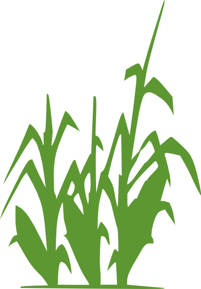 Cornfield png Transparent pictures on F.
