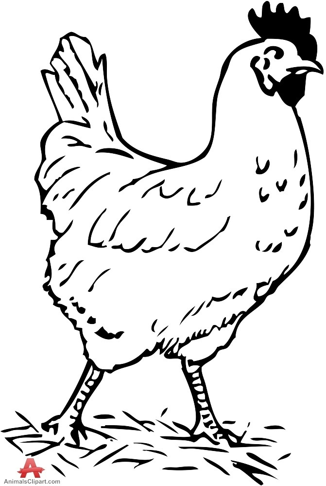 Valuable Black And White Chicken Clipart 68 About Remodel.