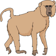 Free Baboon Clipart.