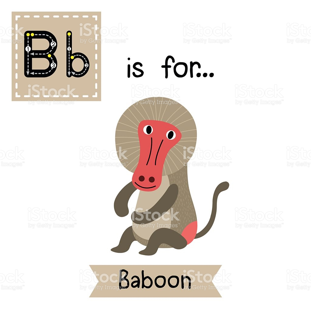 Letter B Tracing Sitting Baboon stock vector art 589548428.