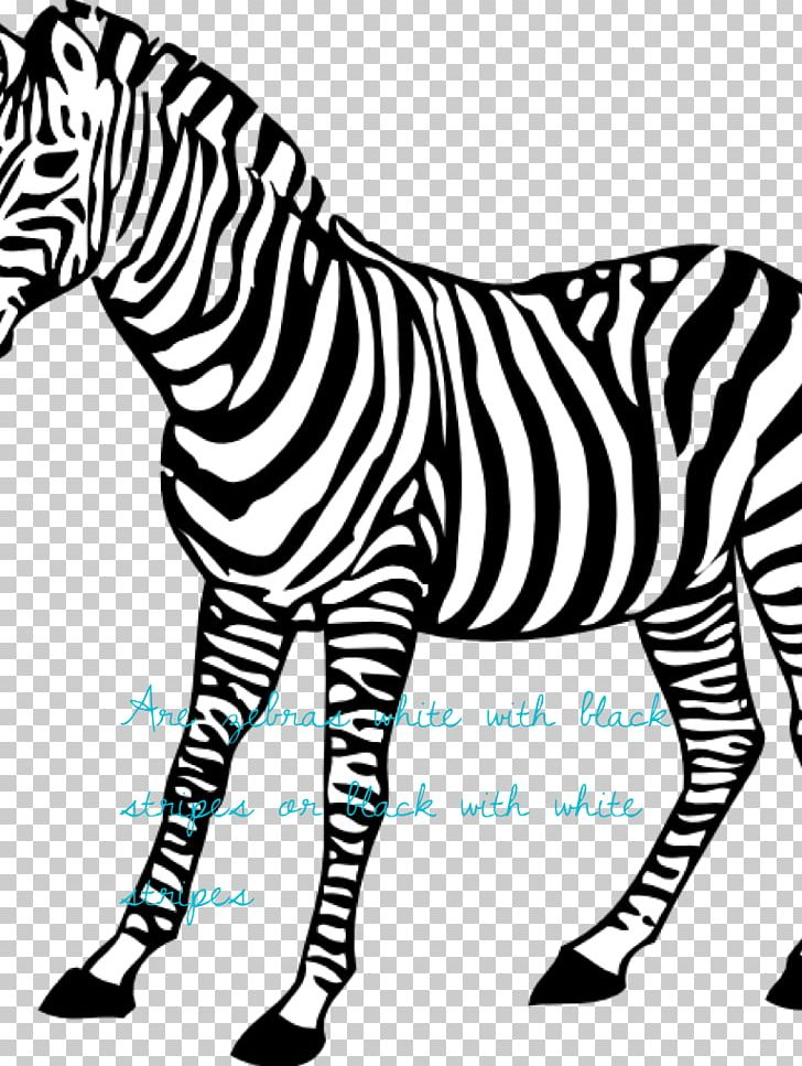 Baby Zebra Coloring Book Animal PNG, Clipart, Adult, Animal.