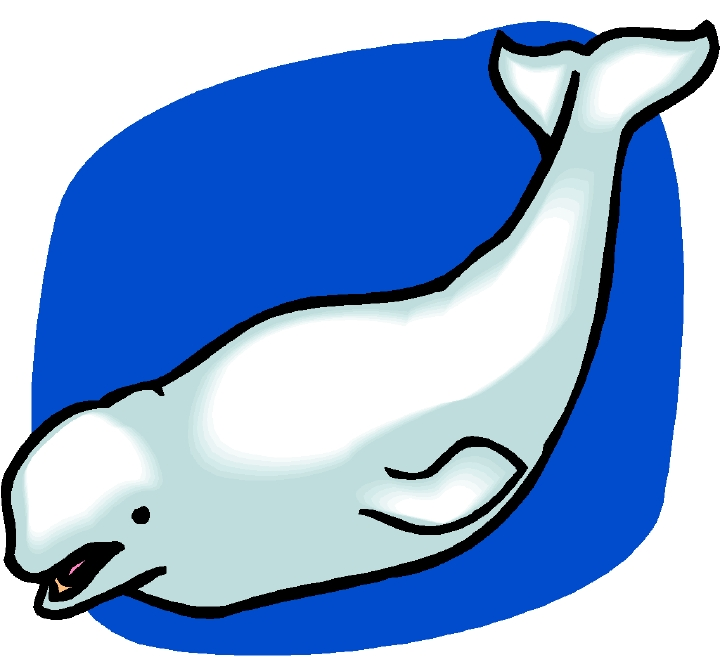 Free Beluga Whale Cliparts, Download Free Clip Art, Free.