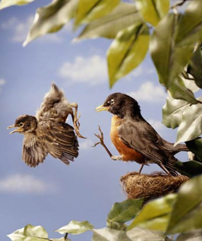 Nature vs Nurture: How do baby birds learn how to fly?.