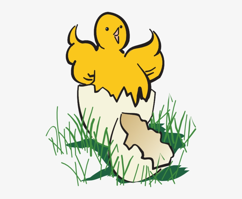 Baby Chick Hatching Clip Art.