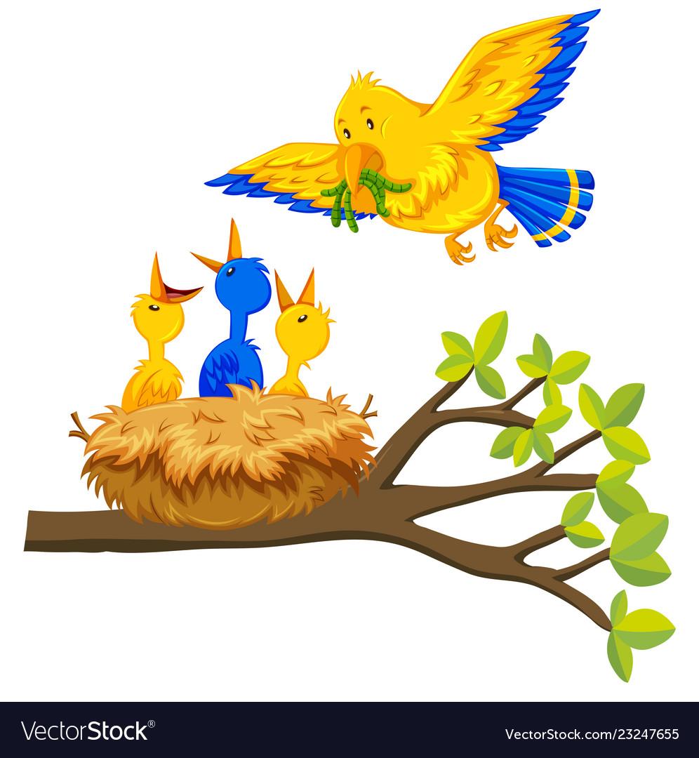 Bird feeding baby bird.