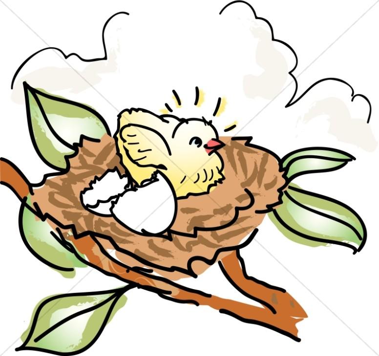 Baby Bird in a Nest.