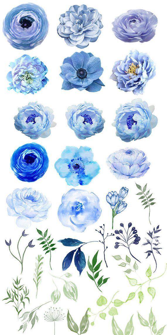 Watercolor Flower Clipart #24, Floral Clip Art, Light Blue.