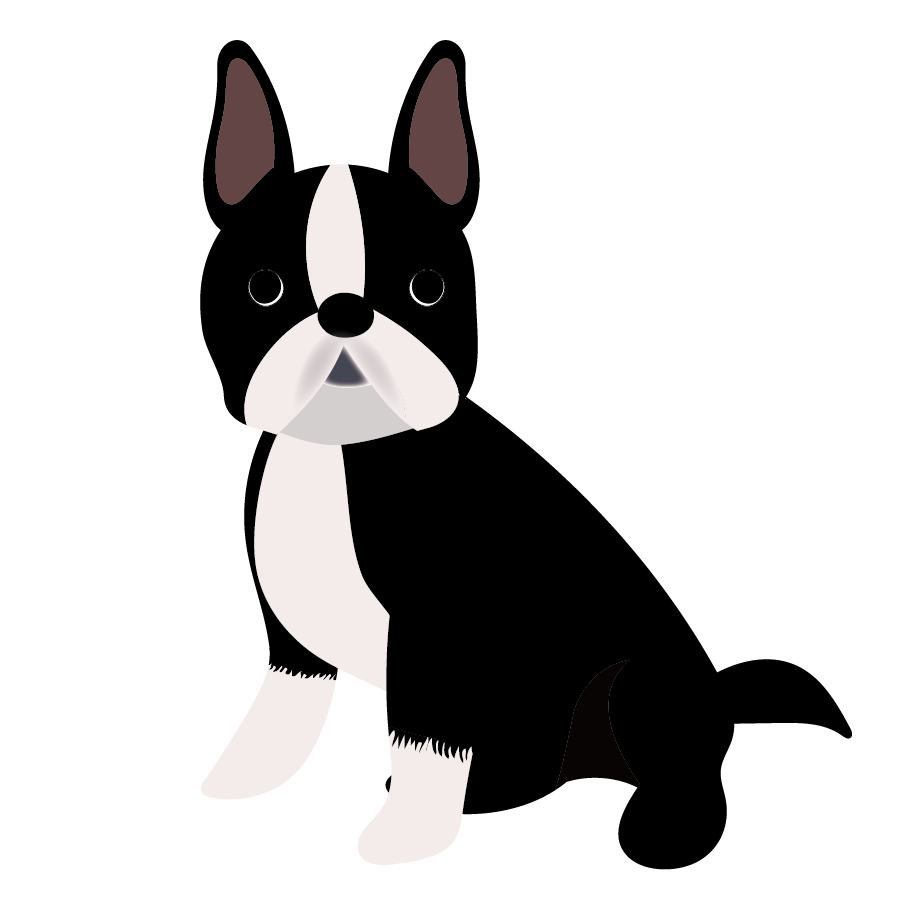 Boston Terrier Puppy Dog breed Companion dog French Bulldog.