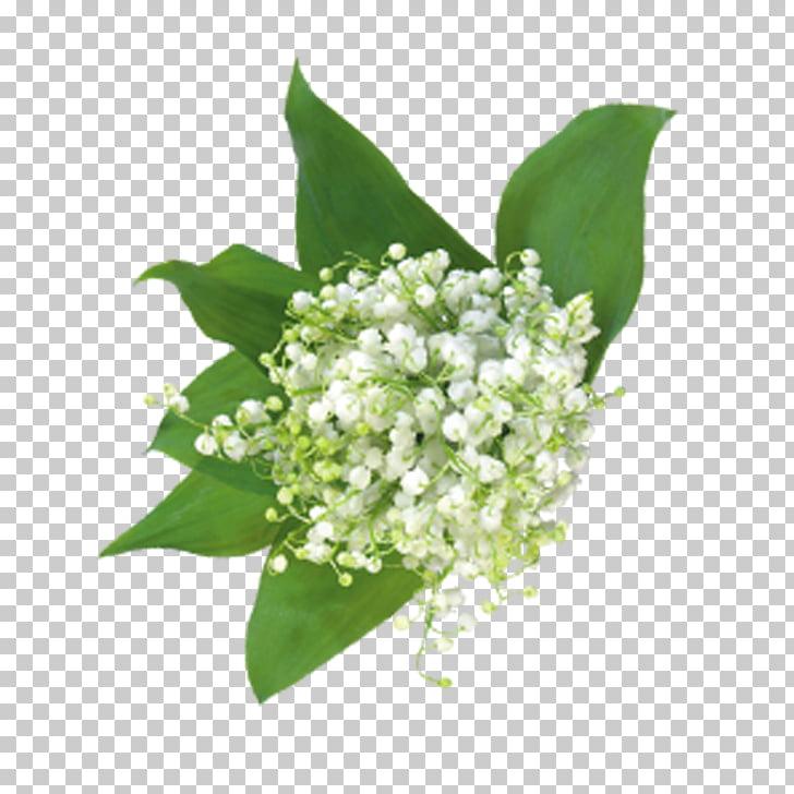 Gypsophila paniculata Flower bouquet Floral design, Baby\'s.