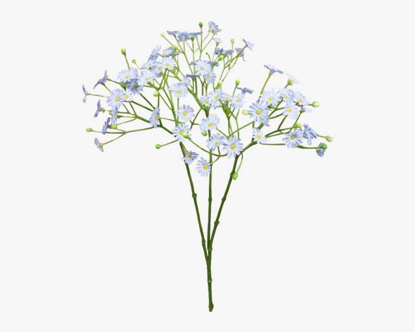 Baby Breath Flower Png Png Free Stock.