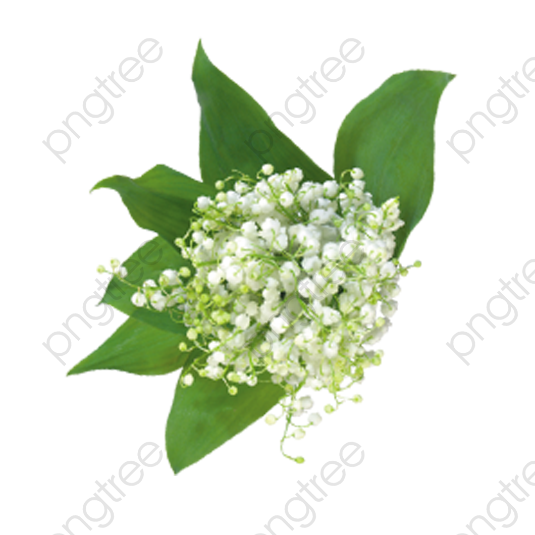 Babys Breath Flowers, Flowers, Bouquet, Baby's Clipart PNG.