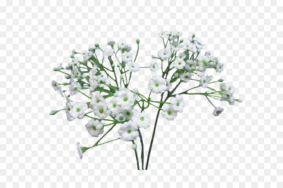 Baby Breath Flower png download.