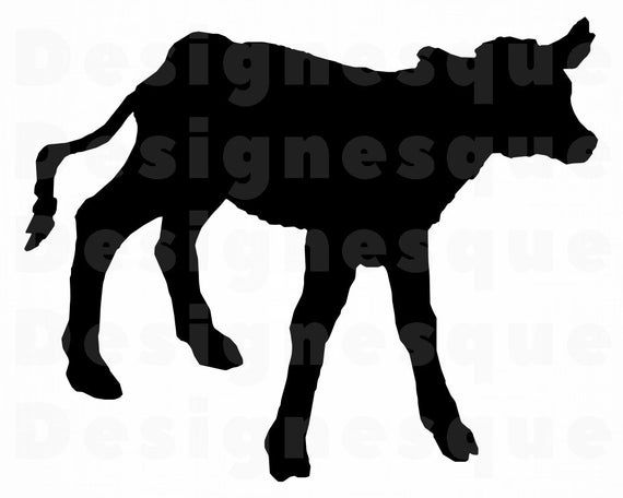 Baby Cow Svg, Calf SVG, Baby Cow Clipart, Baby Cow Files for.