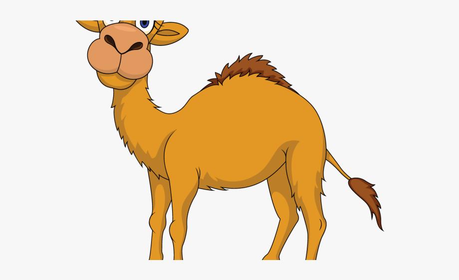 Camel Clipart Uae Camel.