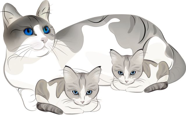 Baby cat clipart - Clipground