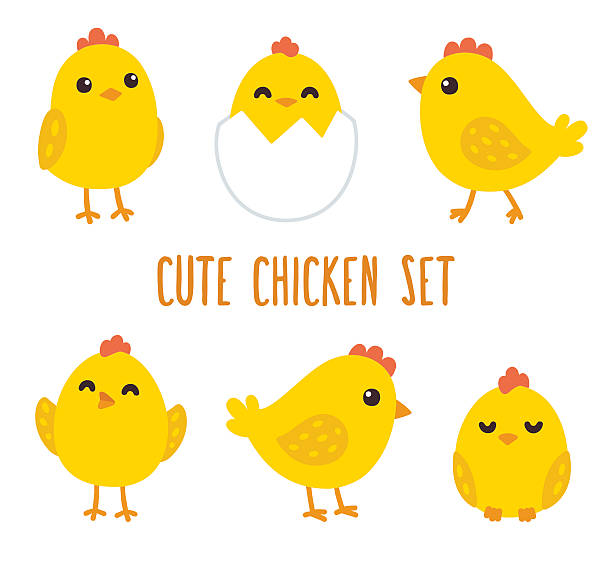Best Baby Chick Illustrations, Royalty.