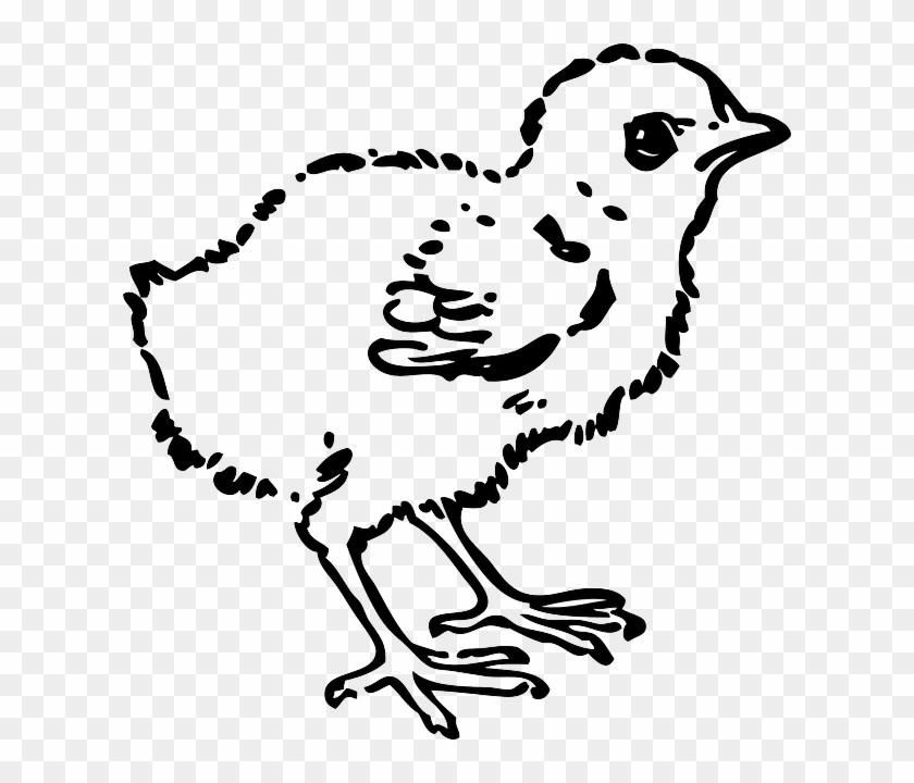 Baby Chick Clip Art.