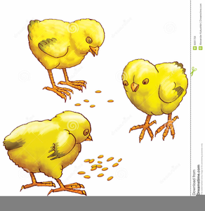Free Clipart Of Baby Chickens.