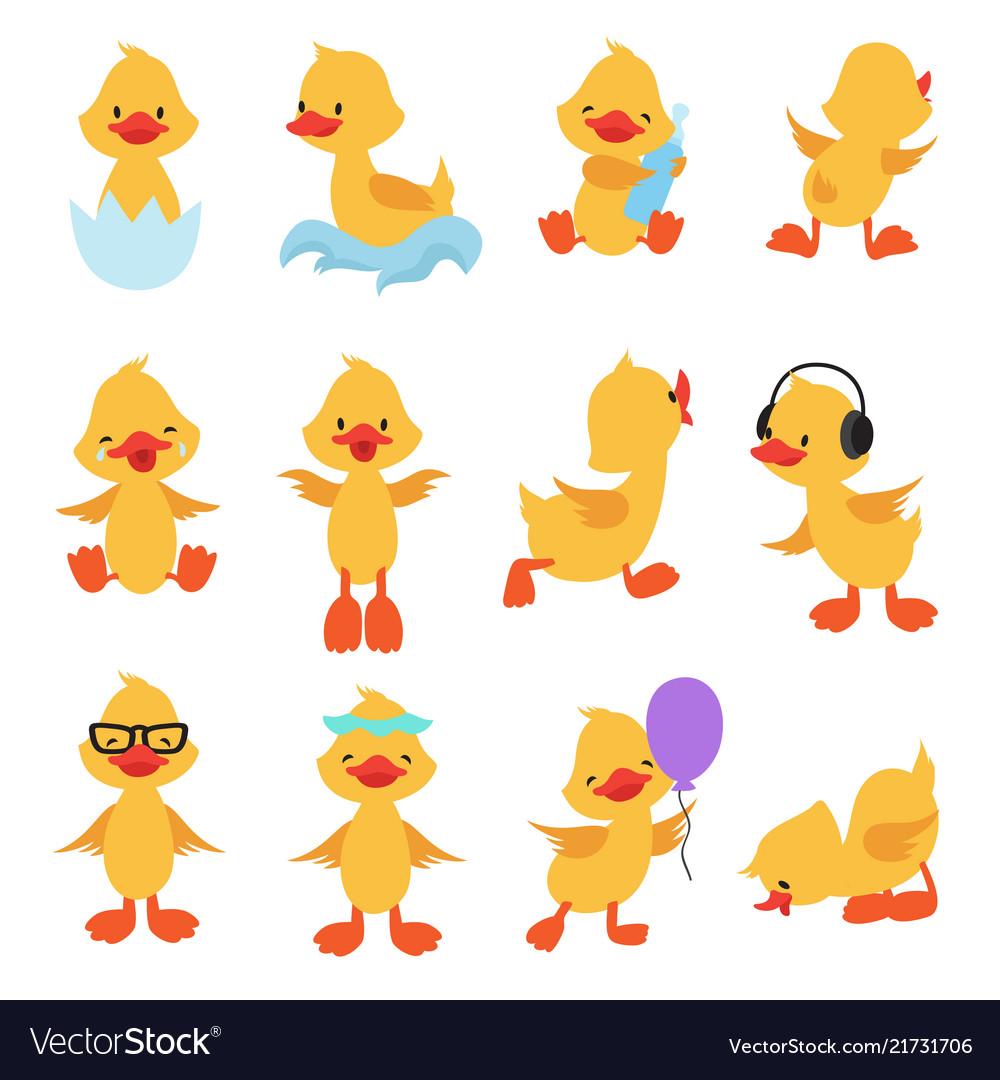 Cute chicks cartoon yellow ducks baby duck.