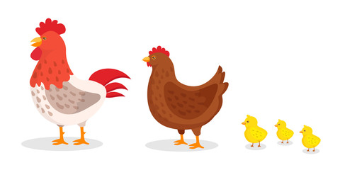 Baby Chicken Clipart photos, royalty.