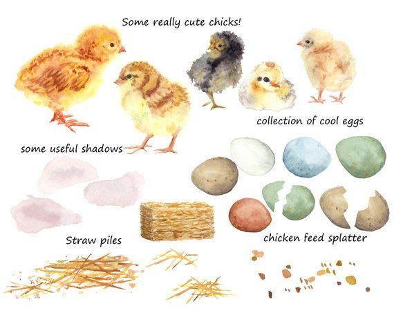 Baby chicks and eggs. Spring time clipart Five different.