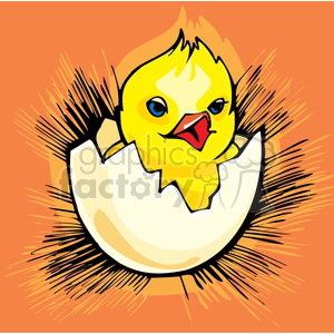 Blue eyed baby chick chirping and hatching clipart. Royalty.