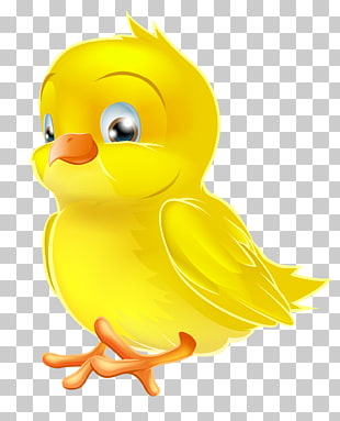 47 chick Pictures PNG cliparts for free download.