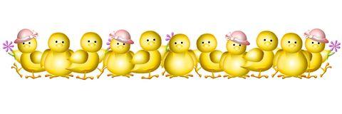 Baby Chicks Stock Illustrations.