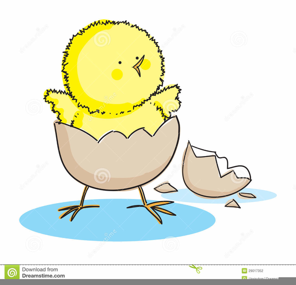 Chick Hatching Clipart.