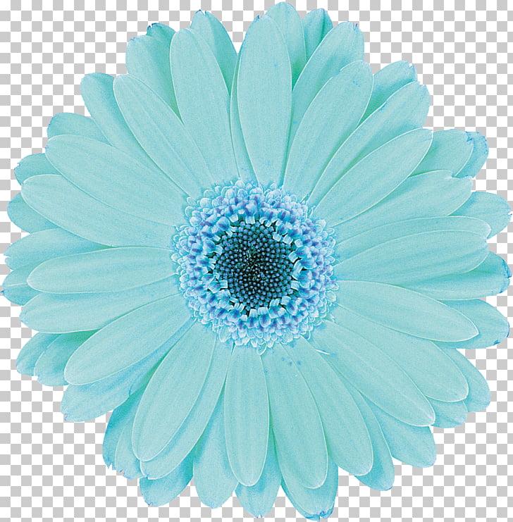 Flower Aqua Baby shower Blue Photography, gerbera PNG.