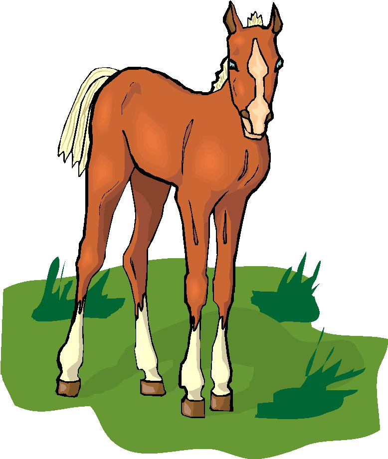 Free Baby Horse Clipart, Download Free Clip Art, Free Clip.
