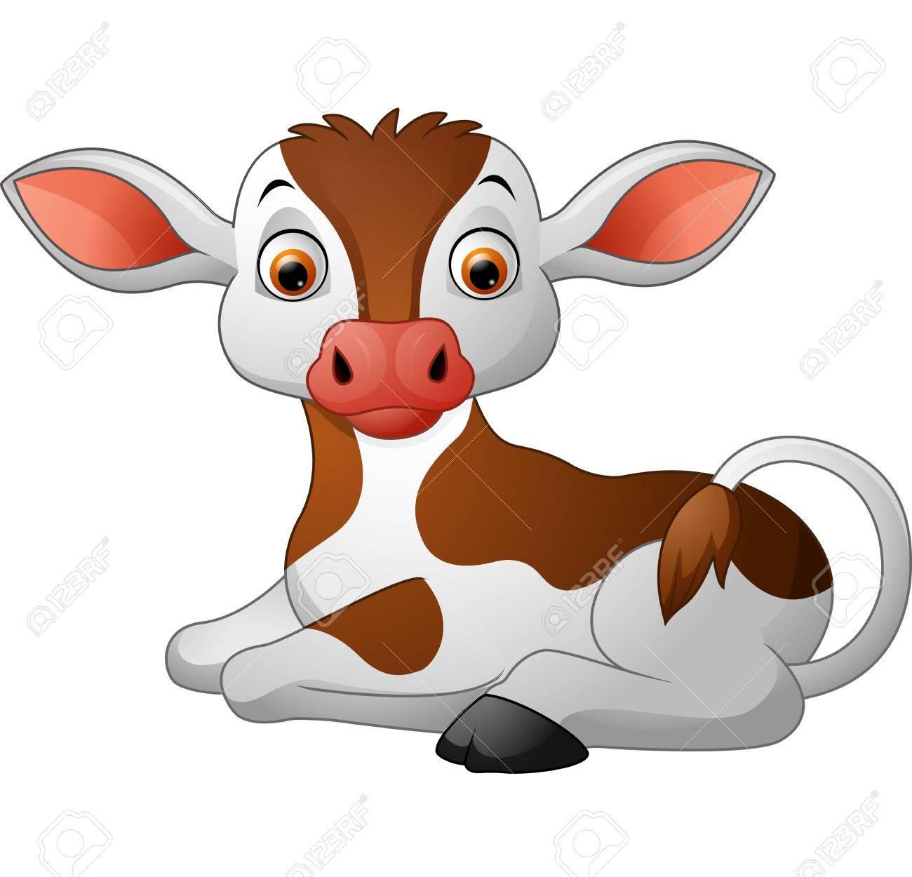 Cute baby cow sitting.