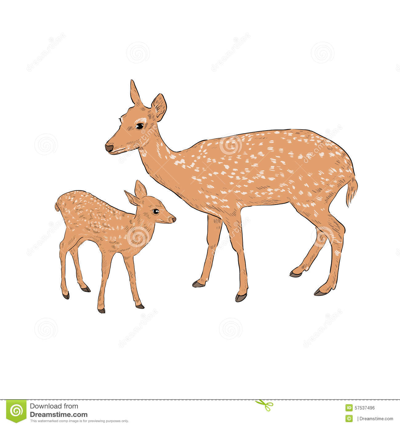Female Deer Clipart.