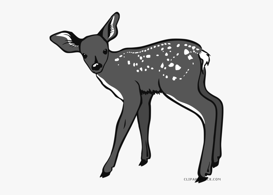 Baby Deer Animal Free Black White Clipart Images.
