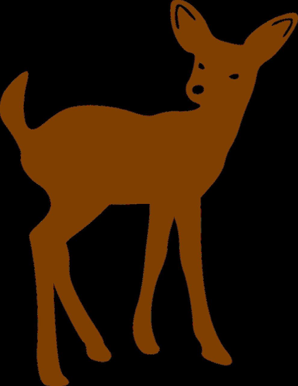 Deer Bambi Brown Mammal Transparent Image Pinterest.