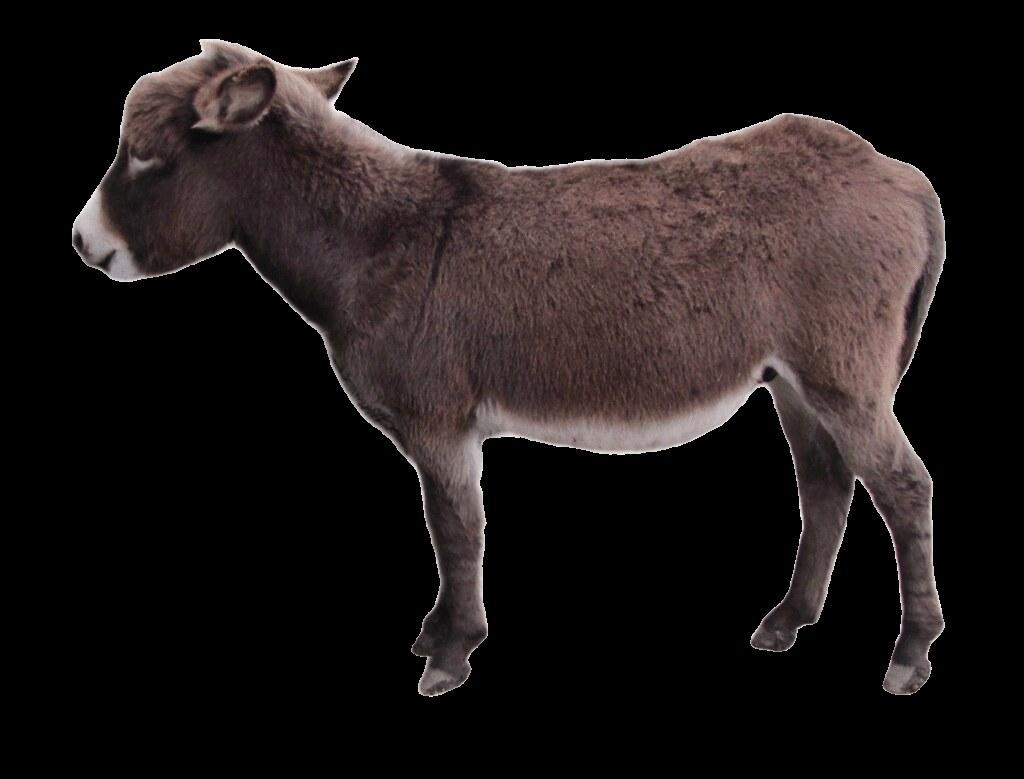 baby donkey clipart, lge 13 cm long.