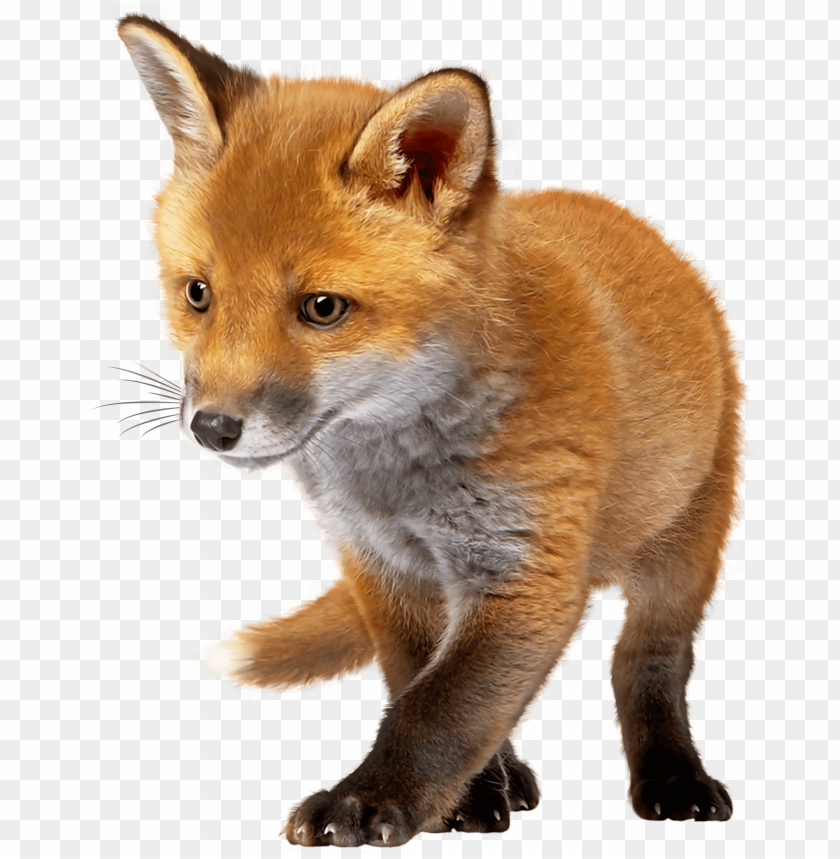 Download baby fox clipart png photo.