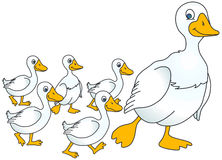 Geese Stock Illustrations.