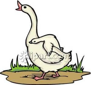 Goose Clip Art Free.