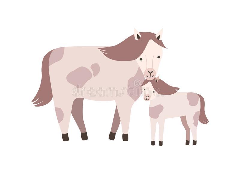 Foal Colt Stock Illustrations.