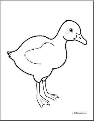 Clip Art: Baby Animals: Goose Gosling (coloring page).